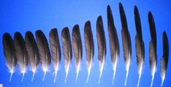 5 Stk Wellendichtring Simmerring NBR 35x72x10-35//72//10 mm AS = WAS = BASL = TC